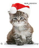 Kim, CHRISTMAS ANIMALS, photos, GBJBWP26254,#XA# stickers