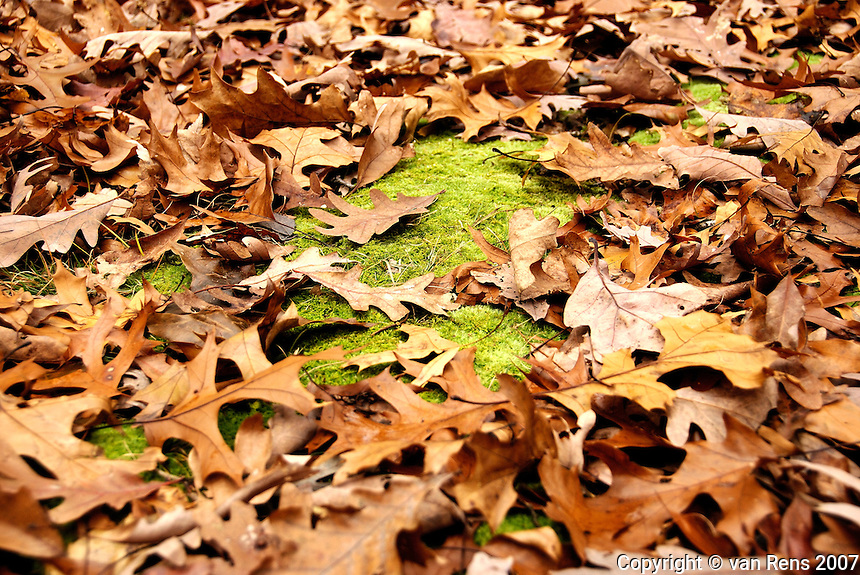 Forest floor in the fall shows continuing greening with moss not changing color.