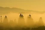 Fog shrouds trees in sunrise over St. Helena