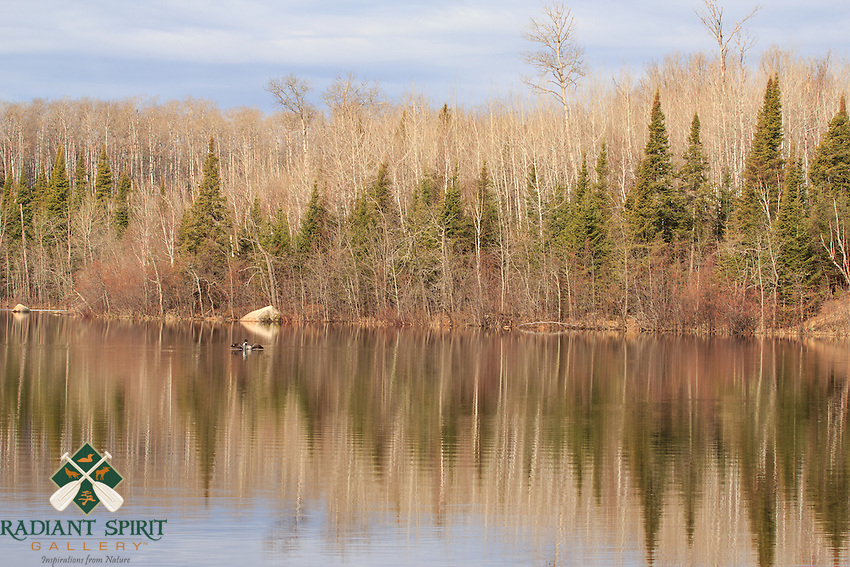 &quot;Spring Reflections&quot;<br />