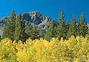 Fall Colors - Mt Tallac