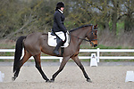 19/03/2017 - Class 1 - Intro A - Unaffiliated Dressage - Brook Farm Training Centre