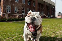 Bully Champ with Agricultural and Biological Engineering building (ABE).<br />