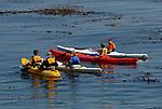 kayaking Monterey