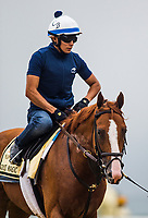 BALTIMORE , MD - MAY 16:  Good Magic completing preparations for the Preakness Stakes at Pimlico Racecourse on May 16, 2018 in Baltimore, Maryland. (Photo by Alex Evers/Eclipse Sportswire/Getty Images)