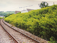 COPY BY TOM BEDFORD<br /> Pictured: The Japanese knotweed behind one of the properties with the bungalow marked.<br /> Re: A homeowner whose bungalow is towered over by Japanese knotweed on a railway line has won a four-year legal fight for compensation by Network Rail.<br /> Robin Waistell claimed he was unable to sell because the rail body had ignored requests to tackle the invasive weed on the bank behind his home in Maesteg.<br /> The case was seen as a likely test for homeowners whose property is blighted by knotweed on railway embankments.<br /> Network Rail said it would be &quot;reviewing the judgement in detail&quot;.<br /> It is understood the rail infrastructure body was refused immediate leave to appeal against the ruling.<br /> Network Rail faces potential legal costs running into six figures after losing the case in Cardiff bought by Mr Waistell and a neighbour.<br /> Widower Mr Waistell, 70, had moved to the bungalow from Spain after his wife died.<br /> He had hoped to return to the sun, but found his property sale stymied by the knotweed growing on adjacent Network Rail land and was asking for &pound;60,000 compensation for loss of value.