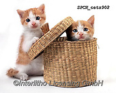 Xavier, ANIMALS, REALISTISCHE TIERE, ANIMALES REALISTICOS, cats, photos+++++,SPCHCATS902,#a#, EVERYDAY