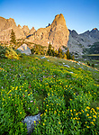Wind River Range, WY: Morning light on Pingora Peak from a field of alpine wildflowers; Cirque of the Towers; Popo Agie Wilderness; Shoshone National Forest