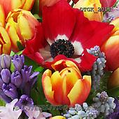 Gisela, FLOWERS, BLUMEN, FLORES, photos+++++,DTGK2011,#f#