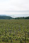 Vineyards on the Old Mission Peninsula with Lake Michigan in distance,Traverse City area, Michigan, USA