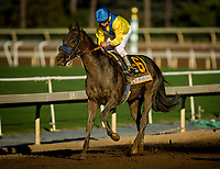ARCADIA, CA - SEPTEMBER 30: Mubtaahij #6 with Dresden Van Dyke at the Awesome Again Stakes aboard Mubtaahij #6 at Santa Anita Park on September 30, 2017 in Arcadia, California. (Photo by Alex Evers/Eclipse Sportswire/Getty Images)
