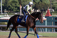 Fed Biz for trainer Bob Baffert at Santa Anita Park in Arcadia California