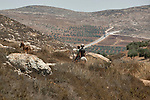 Youth ride a donkey at the outskirts of the unauthorized Israeli settler-outpost of Adei Ad, West Bank.