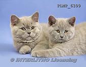 Marek, ANIMALS, REALISTISCHE TIERE, ANIMALES REALISTICOS, cats, photos+++++,PLMP6399,#a#