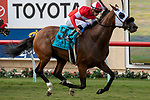 """DEL MAR, CA  AUGUST 17:  #9 Acclimate, ridden by Florent Geroux, wins the Del Mar Handicap (Grade ll) Breeders' Cup """"Win and You're In"""" Turf Division, on August 17, 2019 at Del Mar Thoroughbred Club in Del Mar, CA. (Photo by Casey Phillips/Eclipse Sportswire/CSM)"""