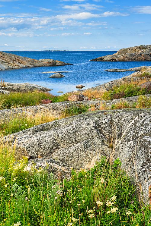 Blommor och gräs vid klippor och skär på Stora-Nassa i Stockholms skärgård.
