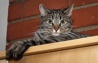 Kira looks at the camera while sitting on a shelf with two paws extended out over the edge.