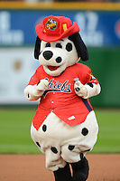 Peoria Chiefs mascot Homer during a game against the Wisconsin Timber Rattlers on May 25, 2013 at Dozer Park in Peoria, Illinois.  Peoria defeated Wisconsin 6-0.  (Mike Janes/Four Seam Images)
