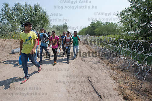 Illegal migrants walk next to a NATO barbed wire fence built to stop illegal migrants entering on the green border between Serbia and Hungary near Asotthalom (about 190 km South of capital city Budapest), Hungary on August 13, 2015. ATTILA VOLGYI