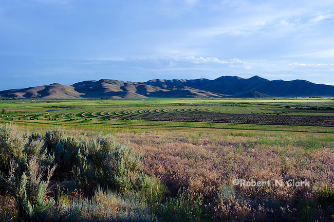 Alfalfa field near Silver Creek in the Picabo area