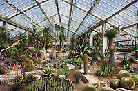 Grossbritannien, England, Kew: Stadtteil Londons im Stadtbezirk London Borough of Richmond upon Thames - Kakteen im Princess of Wales Conservatory des Royal Botanic Gardens, inzwischen UNESCO Weltkulturerbe | United Kingdom, England, Greater London, Kew: district in the London Borough of Richmond upon Thames - Cacti inside the Princess of Wales Conservatory at Royal Botanic Gardens, UNESCO World Heritage Site