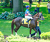 Castle Road in the paddock before the Longines International Ladies Fegentri Amateur race at Delaware Park on 6/8/15