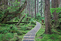 Trail to SGang Gwaay or Ninstints, in Gwaii Hanaas National Park on the islands of Haida Gwaii ( formerly Queen Charlotte Islands ), British Columbia, Canada.