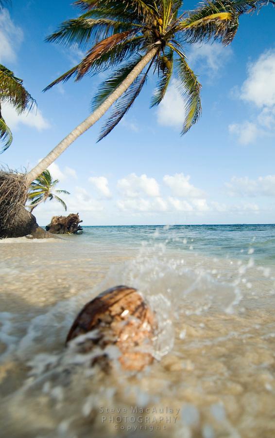 Wave splashing up against a coconut on a sandy palm tree lined beach, Comarca De Kuna Yala, San Blas Islands, Panama