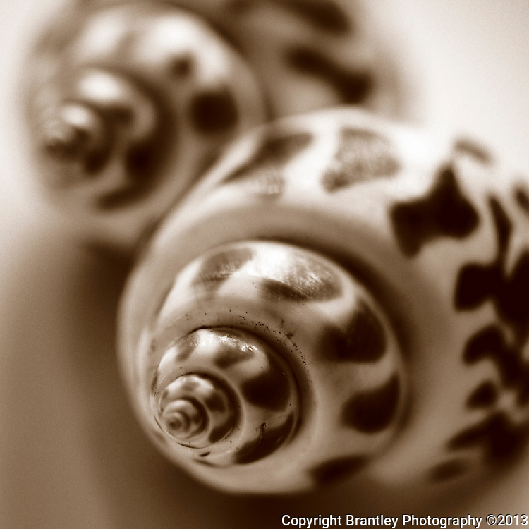 Fine art photography of Seashells