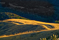 Placerita Canyon State Park And Historic Landmark