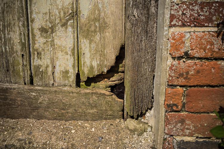 Small kitten with head through broken old door