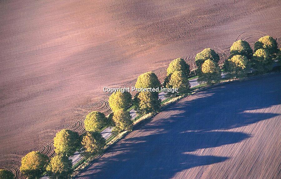 Deutschland, Mecklenburg, Natur, Bäume, Herbst, Allee, Felder, Straße,  .....c Aufwind.Holger Weitzel.Gertrud- Bäumer- Stieg 102.21035 Hamburg.0171 6866069