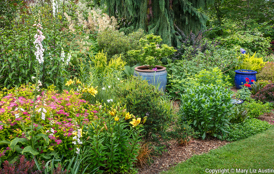 Vashon-Maury Island, WA: Summer perennial garden featuring blue pottery, foxglove, Japanese maples, spirea, lilies and hydrangeas