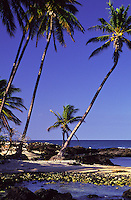 Beach with palm trees at Mauna Lani Bay on the Kohala Coast of the Big Island