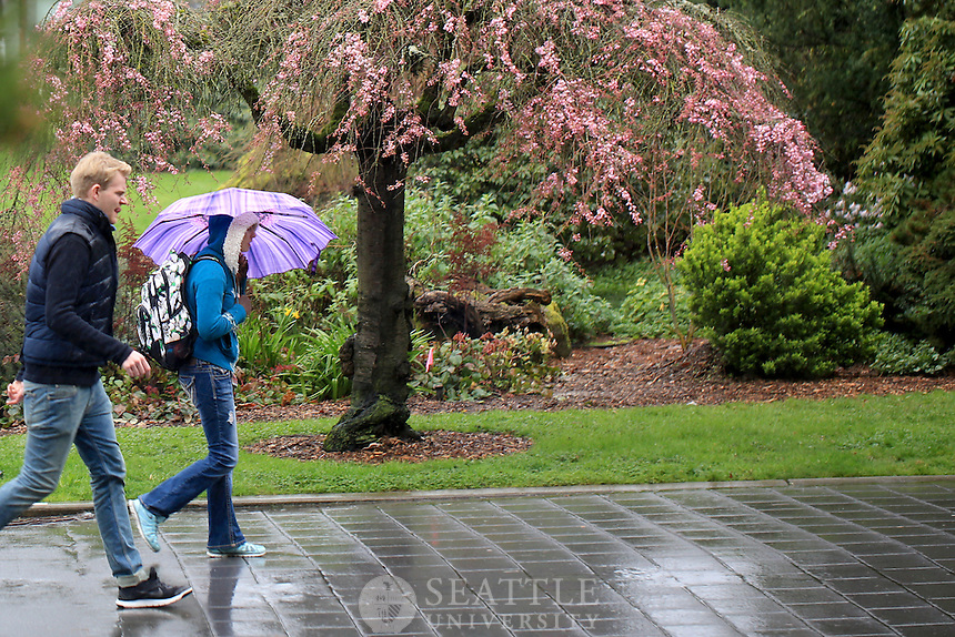 March 1st, 2016- Students rush along the lower mall during an afternoon rain as the beauty of Spring blooms in the background on campus at Seattle University.