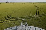 ROMANIA Banat, village Semlac, 2000 hectare farm of german farmer, wheat field and large grain silo/ RUMAENIEN Banat, Landwirt  Reinhold Krüger betreibt eine 2000 Hekat Farm bei Semlac, Weizenfeld und Getreidespeicher