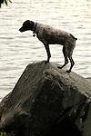 Mixed breed water dog.