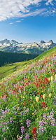 M00044L.tiff   Mixed wildflowers and Tatoosh Mountains. Mt. Rainier National Park. Washington.