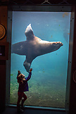 USA, Alaska, Seward, children gazing at a 1500lb sea lion inside of the Alaska SeaLife Center