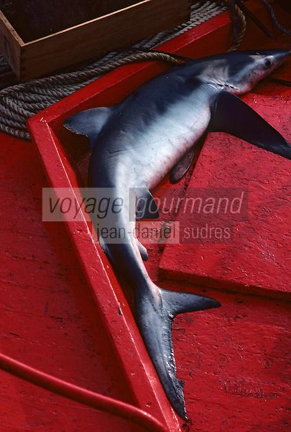 Europe/France/Bretagne/29/Finistère/Port de Kerity: Retour de pêche - Détail requin