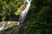 A  waterfall in Dorrigo National Park, New South Wales.