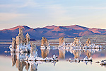 Tufa towers made from calcium-carbonate rise out of Mono Lake at the Mono Lake Tufa State Natural Reserve in California, USA