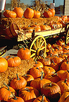 Pumpkin harvest display on antique cart.  Minnesota USA