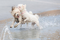 Playing dogs cool themselves down in the summer heat in Budapest, Hungary on August 21, 2012. ATTILA VOLGYI