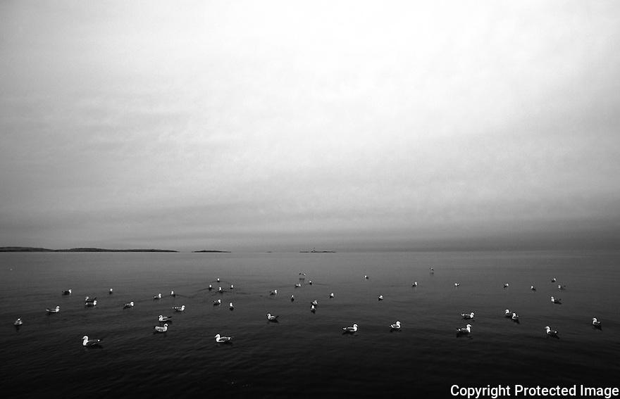 Quiet moment in a quiet sea