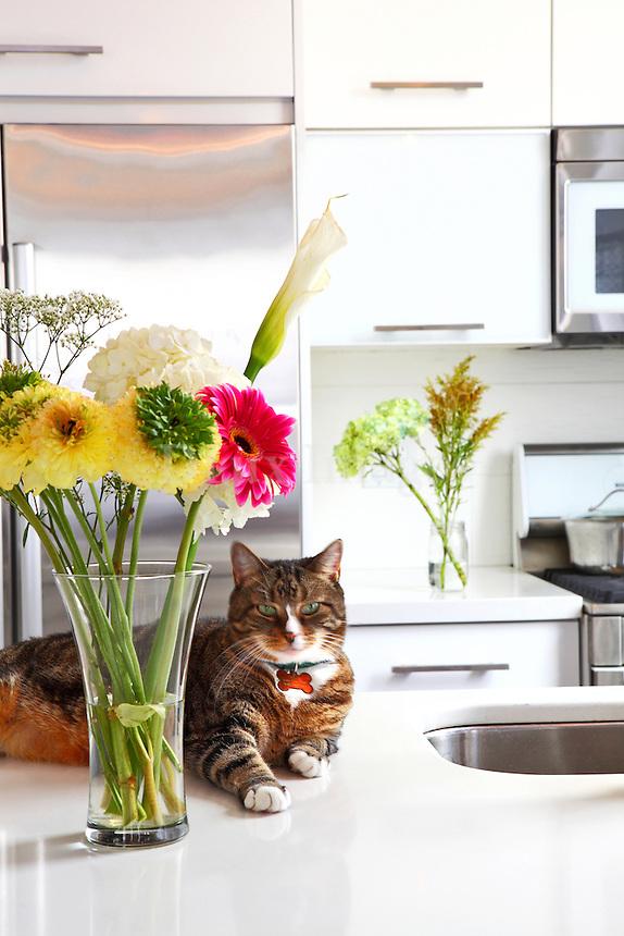 owner's pet on modern kitchen