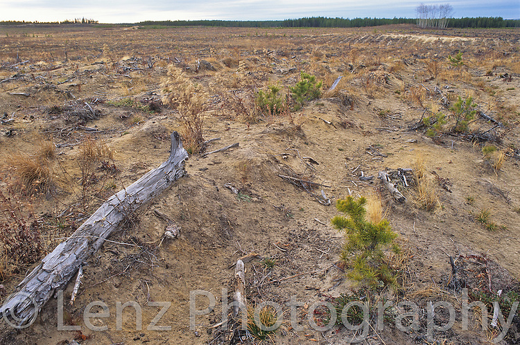 Clearcutting and desertification..Meadow Lake, Northern Saskatchewan..Canada                           The Canadian boreal is being logged at a rate of 4000 football fields each day.        ..Copyright Garth Lenz. Contact: lenz@islandnet.com www.garthlenz.com