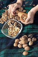 Kind, Junge knackt gesammelte Walnüsse mit einem Nussknacker, Walnuss, Walnuß, Wal-Nuss, Wal-Nuß, Reife Früchte, Nüsse, Ernte, Juglans regia, Walnut, Noyer commun