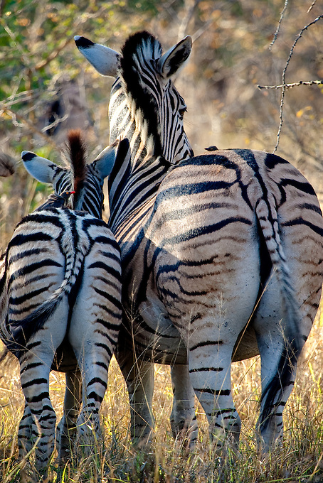 Wildlife photography outside Africa's Kruger National Park.