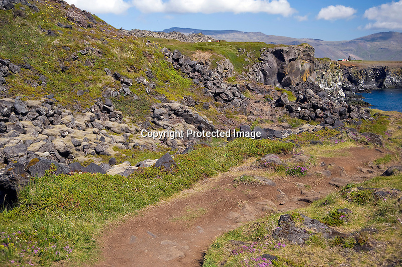 Walking Trail through the Lava Field along the Hellnar Coast in West Iceland